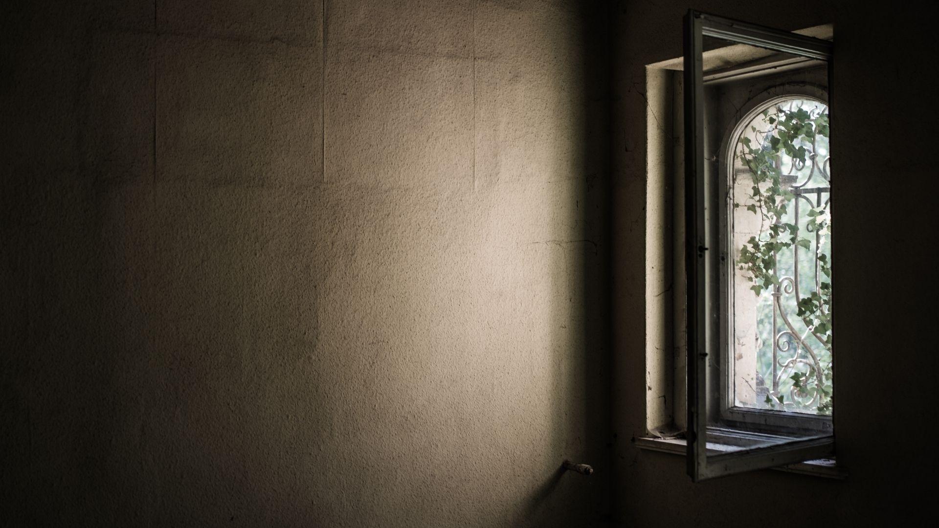 Der Open Window Effekt - Titelbild